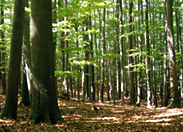 持続可能な森林の木を使うイメージ